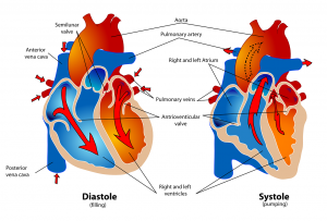 human-41546_1280-300x203 ArzaMed software cardiologia