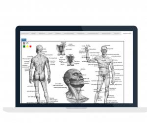 Progetto-senza-titolo-1-300x251 gestionale per medicina del dolore