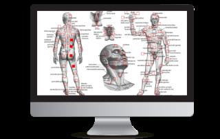 ArzaMed Anantomic Mappatura Digitale Immagini Anatomiche